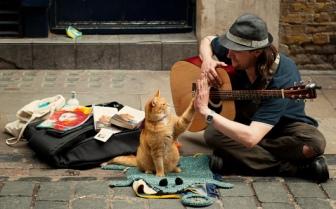 um-gato-de-rua-chamado-bob-2